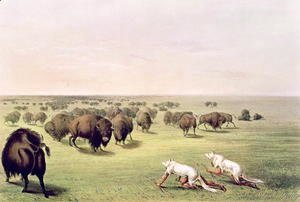 George Catlin - Hunting Buffalo Camouflaged with Wolf Skins, c.1832