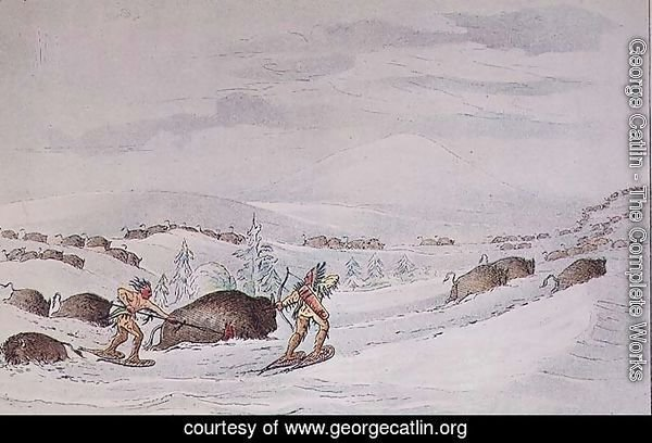Hunting buffalo on snow-shoes