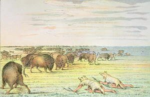 George Catlin - Stalking buffalo