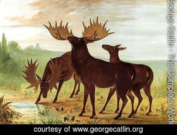 George Catlin - Moose at Waterhole