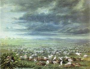 George Catlin - Ambush for flamingos in South America