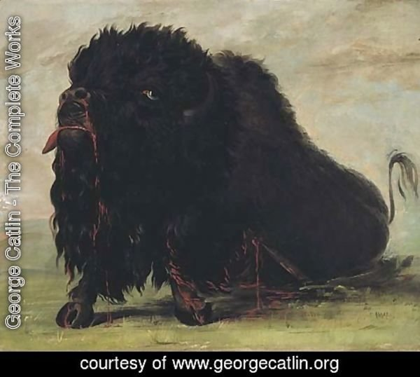 George Catlin - Dying Buffalo, Shot with an Arrow