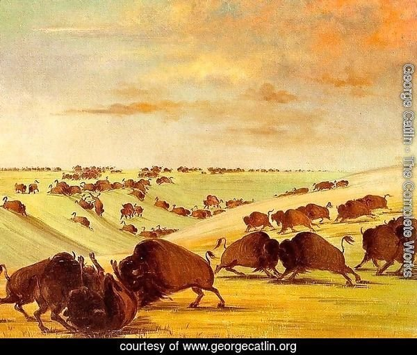 Buffalo Bulls Fighting in Running Season, Upper Missouri, 1837-39