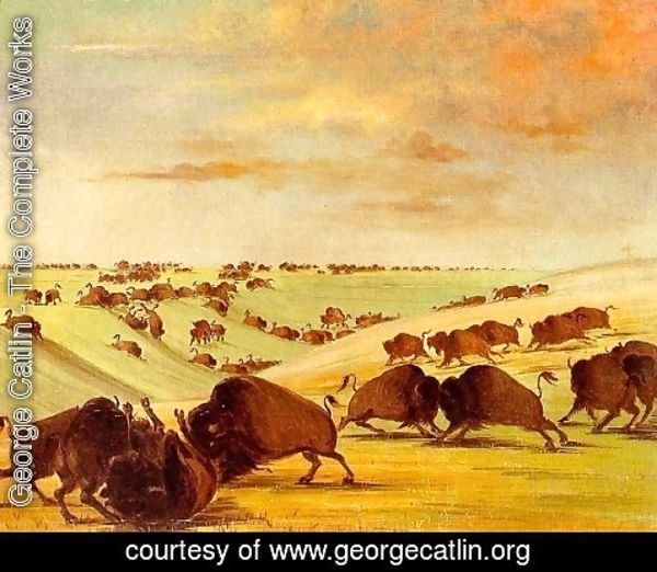 George Catlin - Buffalo Bulls Fighting in Running Season, Upper Missouri, 1837-39